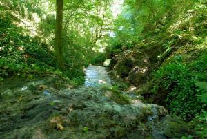 La Cascade de Hauterive, Panziók  Pinel-Hauterive - big - 18