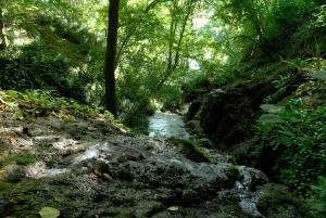 La Cascade de Hauterive, Panziók  Pinel-Hauterive - big - 22
