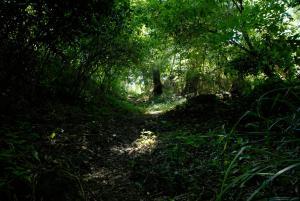 La Cascade de Hauterive, Panziók  Pinel-Hauterive - big - 23