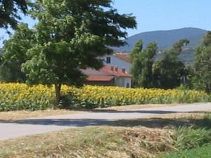 Agriturismo San Luigi