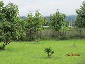 Orange Grove Resort, Rezorty  Pai - big - 15