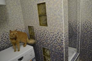 Апартаменты Red Cat - фото 27