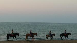 obrázek - Sandy Beach