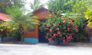 Hotel Osa Palmar Norte photos