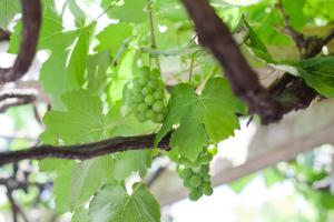 The Vineyard on Ballito, Affittacamere  Ballito - big - 49