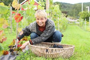 Lerkekåsa Vingård, Agriturismi  Gvarv - big - 5