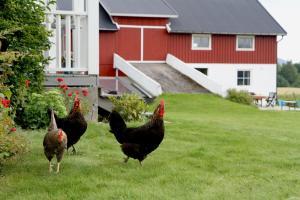 Lerkekåsa Vingård, Agriturismi  Gvarv - big - 2