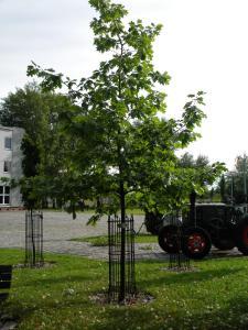 Hotel Kosmonauty Wrocław-Airport, Hotel  Breslavia - big - 43