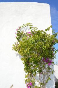 Es Pas Formentera Agroturismo, Vidiecke domy  Es Calo - big - 63