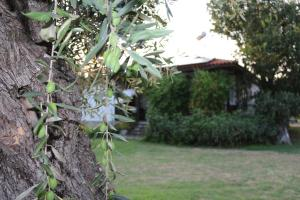 Patroudis House