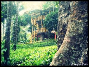 Jungle Jive Tree House Munnar