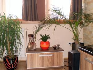 White Coffee Apartment, Апартаменты  Копаоник - big - 13