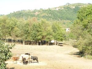 Il Grappolo In Langa