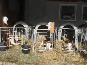Erholung am Bauernhof bei Familie Seidl / Messner, Farmy  Zeutschach - big - 35
