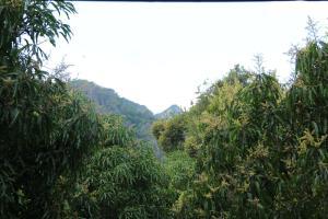 Forest Glen Bungalow - Dambulla, Гостевые дома  Дамбулла - big - 13