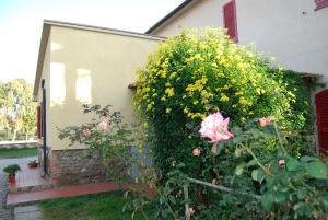 Residence Guardamare, Aparthotely  San Vincenzo - big - 12
