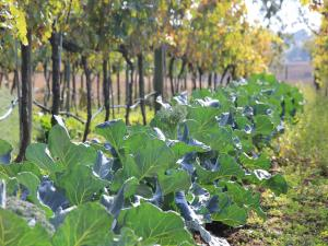 Agriturismo B&B Vallegiorgio, Farmy  San Lorenzo Nuovo - big - 14