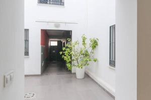 Apartamento Picasso, Ferienwohnungen  Málaga - big - 3