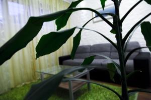 Apartment Mala, Apartmány  Split - big - 21