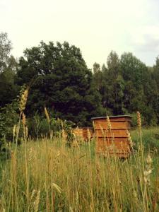 Glempings Klaukas, Campsites  Sigulda - big - 14