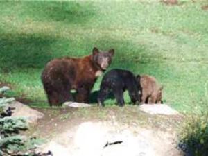 Discovery 4 #113, Ferienwohnungen  Mammoth Lakes - big - 8
