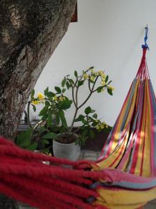 Ok Cabana Negombo, Apartments  Negombo - big - 3