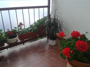 Apartment Tramonto, Appartamenti  Senj - big - 2