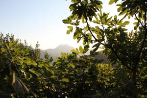 Lucca Country Rentals, Penzióny  Coreglia Antelminelli - big - 37
