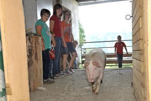 Abelhof, Farmy  Schladming - big - 18