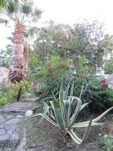 Villa Adamo, Vily  Scopello - big - 28