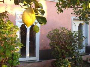 Casa Albini, Bed and Breakfasts  Torchiara - big - 28