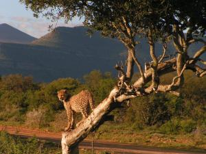 Samara Private Game Reserve Karoo Lodge