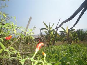 Suan Pin Houses, Загородные дома  Пай - big - 27