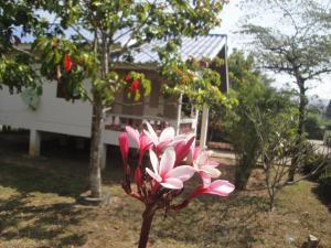 Suan Pin Houses, Загородные дома  Пай - big - 25