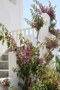 obrázek - Korali Hotel and Apartments