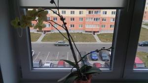 Апартаменты Рябиновой - фото 10