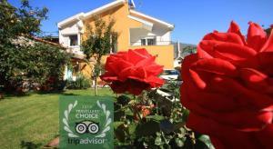 Pansion Rose - фото 3
