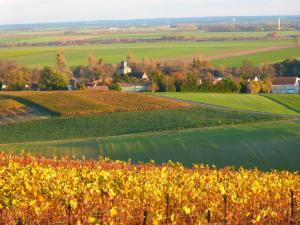 Entre Vignes Et Marais, Privatzimmer  Vert-la-Gravelle - big - 12