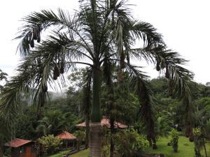 Pacuare River Lodge, Лоджи  Bajo Tigre - big - 32