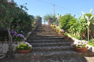 Il Melograno, Bed and Breakfasts  Torchiara - big - 7