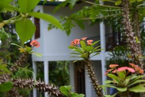 Hillside Relax Villa