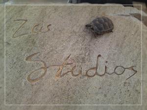 obrázek - Zas Studios