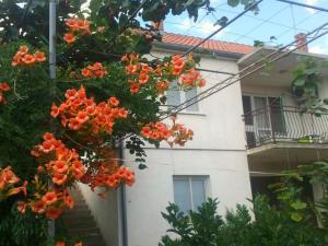Apartment Ranka