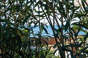 Le Bianche, Apartments  Torre Suda - big - 15