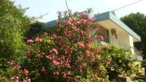 Отель Wind Heaven Garden, Кызылот