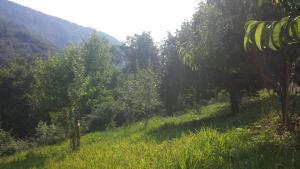Casa delle Noci, Дома для отпуска  Grimacco - big - 14