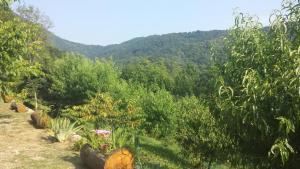 Casa delle Noci, Дома для отпуска  Grimacco - big - 15
