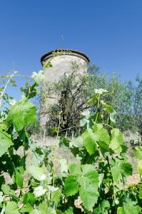Chateau Pech-Céleyran, Bed & Breakfasts  Salles-d'Aude - big - 39