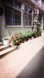 Beidaihe Shanlianju Homestay, Hotely  Qinhuangdao - big - 8