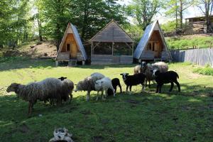 Turbaza Svetlyachok, Farm stays  Gornyy - big - 4